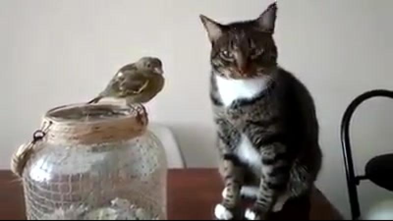 Когда сказали, что птичку нельзя трогать, а хочется... ☺😬😑