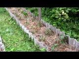 Семья Бровченко. Какой водой и когда правильно поливать растения на огороде.