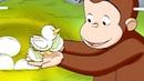 Coco der Neugierige Affe 🐵Eine ungewöhnliche Enten 🐵Ganze Folgen Staffel 5 🐵Cartoons für Kinder