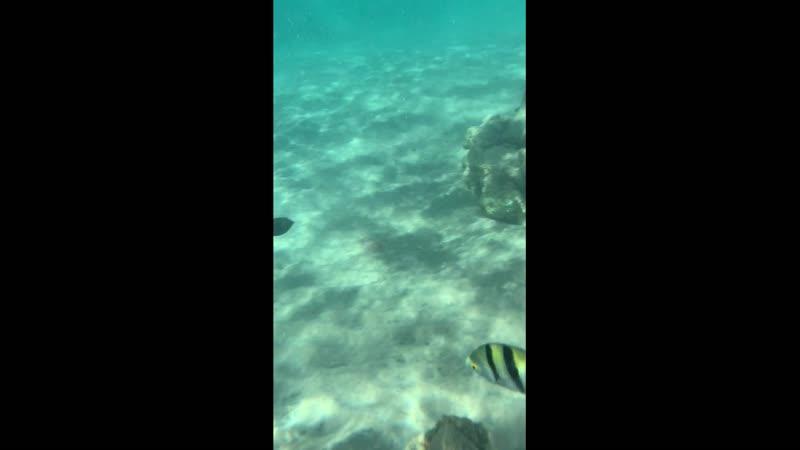 Подводный мир Надиными глазами (через маску)... :))