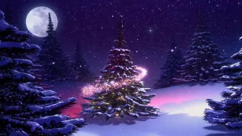 Футаж Новогодняя елка в лесу mp4