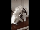 Попугайчик вне настроения!😂😂😂