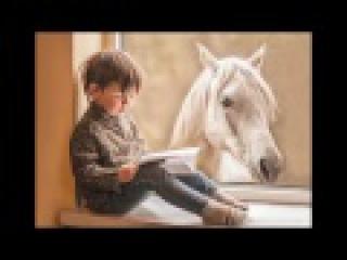 Я мечтаю о коне
