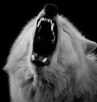 Loneli Wolf, 9 ноября 1999, Хотьково, id225527316