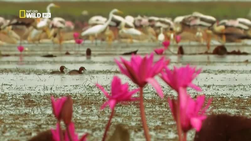 Nat_Geo_Wild__Dikaya_priroda_Tailanda._CHast_1__iz_21080r__MosCatalogue.net