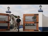 Лошадки это великолепно