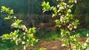 Как растут плодовые культуры по методу Хольцера