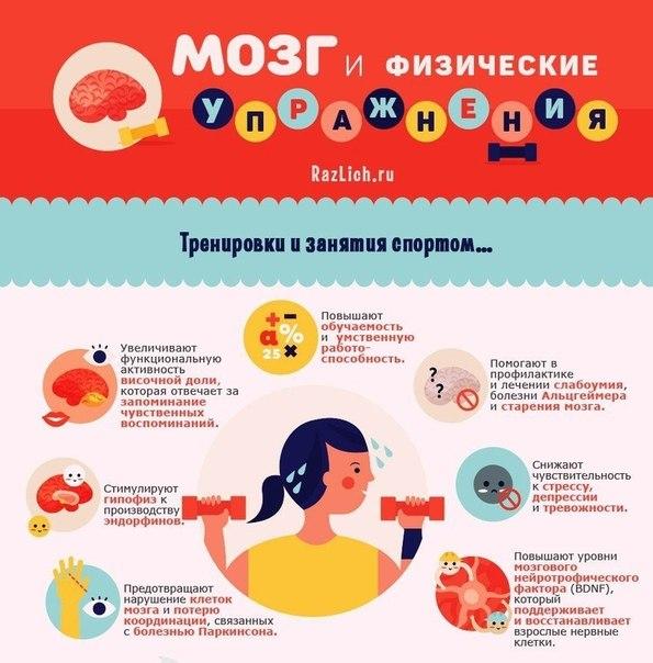 Мозг и физические упражнения