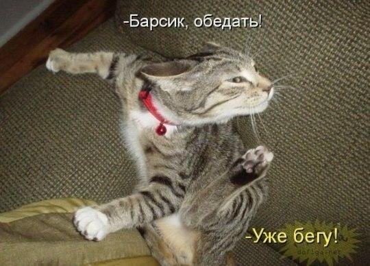 подборка от стасевича HWkYKXlpboQ