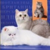 Питомник кошек ELITE BELL*UA - УКРАИНА