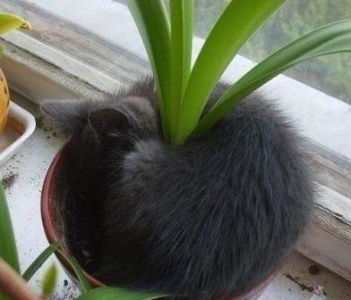 Пушистое растение.