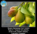 Фото Мамета Чабанова №22