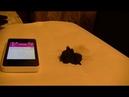Мобильный телефон воздействует на железные опилки