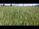 Башкирский ветер