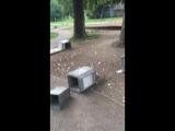 С пятницы на субботу молодежь порезвилась в детском парке г. Каргополь