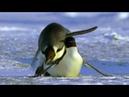 СЕКС Пингвины Ухаживания Скрещивание Родительское поведение Вынужденная моногамия