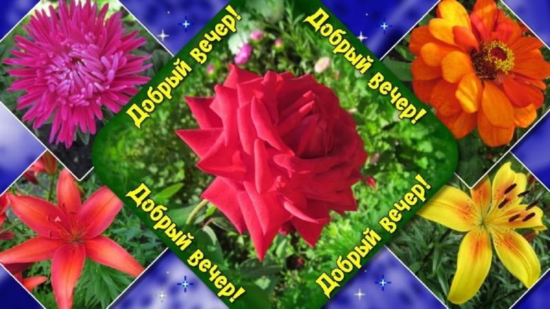 Добрый вечер! Желаю приятного вечера!