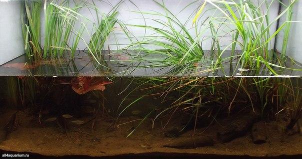 Конкурс дизайна биотопных аквариумов JBL 2014 T8y8ldHAgfk