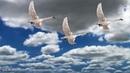 Вокальный ансамбль Сударушка - Гуси-лебеди летят