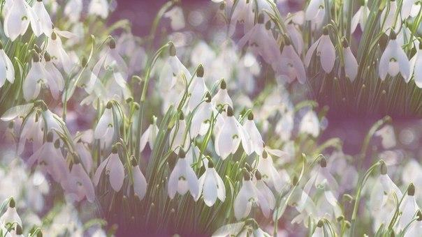 Цветочные и растительные фоны - Страница 3 EJY_G8p7MnQ