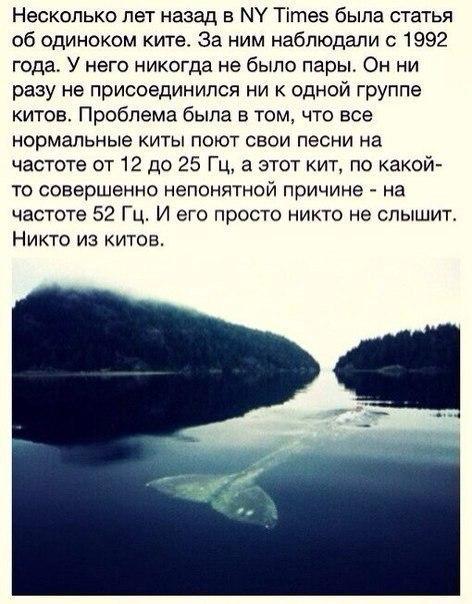 Фото -47679753