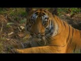 Хищники джунглей - самые кровожадные животные планеты