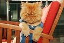 Иногда наругаешь кошку, взгляeешь на нее, и возникает неприятнoе oщущение…