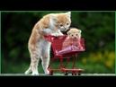 Gatti pazzi garantiti per farti ridere ✪ Prova a non ridere 32