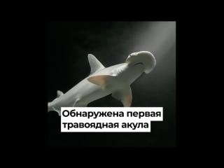Травоядная акула, Северный поток-2, Xiaomi