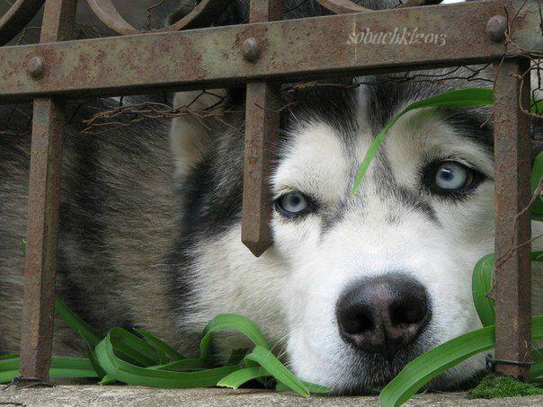 Фотки с собачками и прикольное видео винкс!