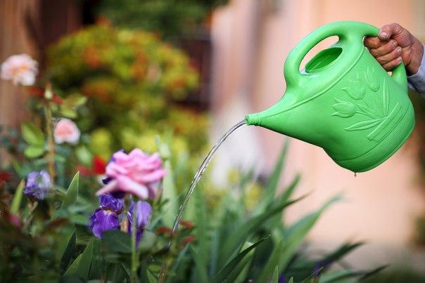 Как вода дает цветку силу жизни, так и молитва наполняет душу чистотой...