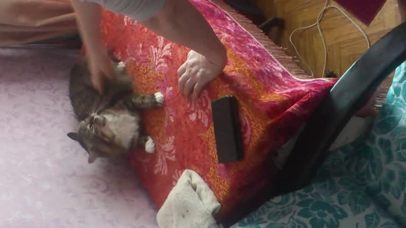 Мама играет с котом