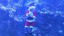 Новый год под водой в Калифорнии Санта Клаус поздравил детей из аквариума