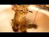 Смешные приколы с котами (Очень интересно)