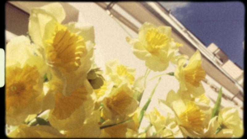 Нарцисы летом