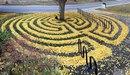 Художник и фотограф Джоанна Хедрик использует опавшие листья для создания узоров на траве…