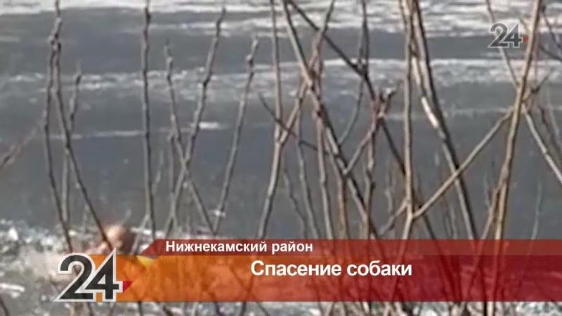 Прохожий спас собаку, провалившуюся под лед