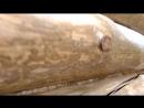 Шлифовка стен в бане по проекту Мичуринский