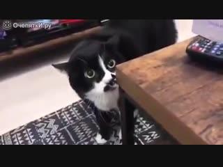 Кот что-то напевает 2018 2019 2017 юмор приколы котята коты смех смешное видео видос угарные кот смешные прикол
