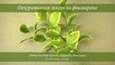 Декоративная зелень из фоамирана мастер класс