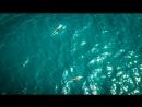 Крым 18 - аэросъёмка дельфинов