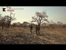 Основной инстинкт - охота в Камеруне - 13 серия