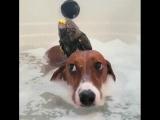 Вы зачем залезли в мою ванну
