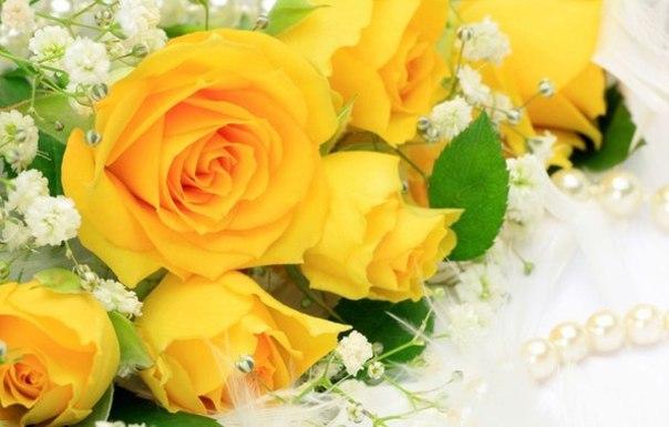 Жёлтая роза жёлтое розы цветы 1400х