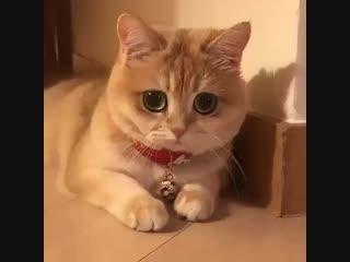 любишь котиков