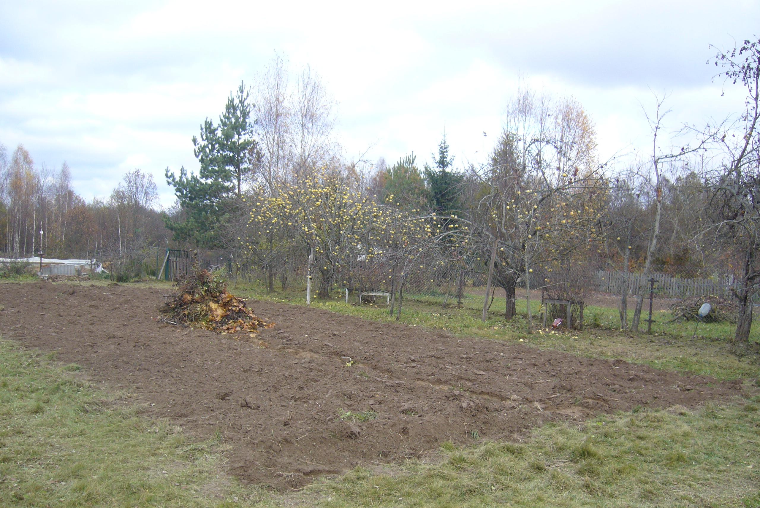 Как легко можно решить проблему с яблоками (на самом деле нет) урожай