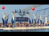 Dolphin showДельфин шоу - Sealanya