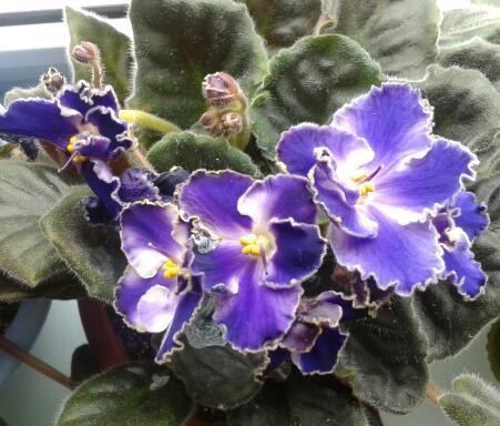 Цветы у Ликки GoWW7dB_gn4