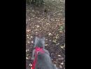 Кот и белка в Подушкинском лесу