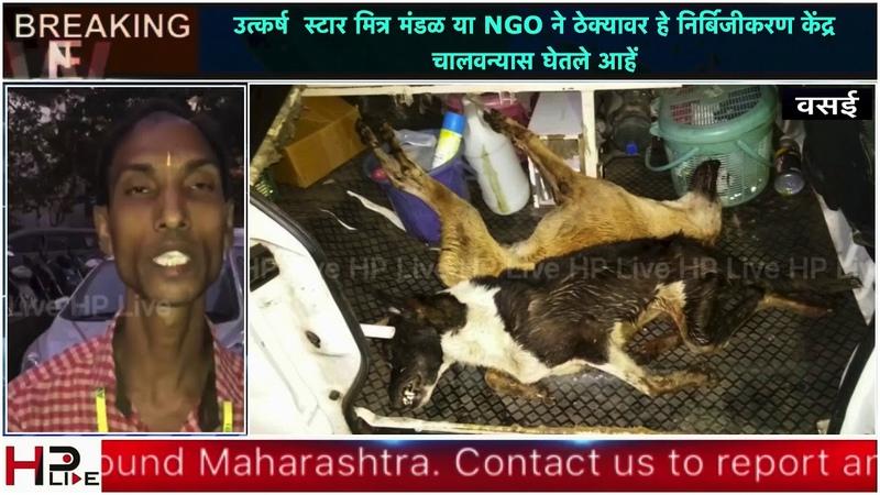 Vasai : Animal centre staff's Diwali leave kills 3 dogs